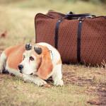Passaporte para o seu pet