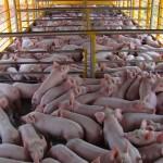 Novas regras para emissão de guias de trânsito animal