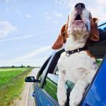 Vou viajar, mas e o meu pet?