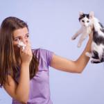 Esperança para fim de alergias geradas por gatos