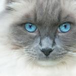 Gatos em alta