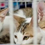 Rio tem novas regras para adoção de cães e gatos