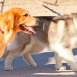 Dog Walkers são saída para donos ocupados