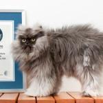 Felino com 22 cm de pelo entra para o Guinness Book