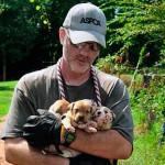 Pitbulls usados em rinha são resgatados nos EUA