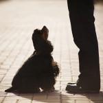 Um olhar para o comportamento dos cães