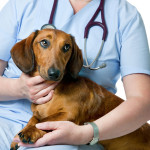 Aguenta coração: conheça a doença inimiga dos cães
