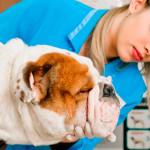 Animais de estimação podem ter plano de saúde e até cirurgia plástica