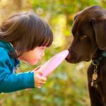 Brincadeiras ajudam a aliviar o estresse dos cães
