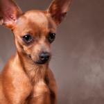 Cigarro pode causar doenças em cães e gatos