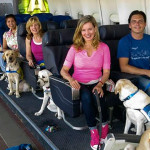 Estúdio de cinema em Hollywood ensina cães a viajar de avião