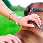 Guias e coleiras: escolha o modelo certo para seu cão