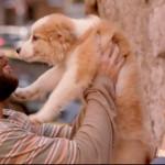 Mato-sem-cachorro-um-filme-para-quem-ama-caes