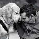 Memória canina é semelhante à humana