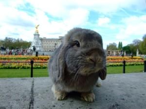 Ao fundo, o Palácio de Buckingham