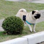 Sistema de GPS é solução para cães e gatos fujões