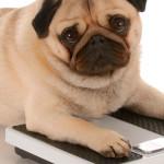 De olho na obesidade: doença grave atinge cães e gatos