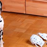 Evite acidentes domésticos com pets