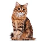Gatas e cadelas precisam fazer o exame de mamas