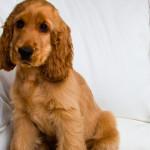 Alzheimer Canino afeta rotina dos cães e donos
