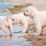 Animais de estimação também precisam de cuidados na praia