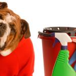 Aprenda como manter sua casa livre do mau cheiro dos pets