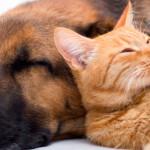 Depressão em animais de estimação