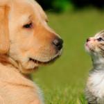 Fecaloma em cães e gatos