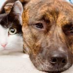 Intoxicação com chumbinho pode ser fatal em animais e humanos
