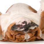 Tempo seco prejudica os pets