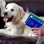 Cães e gatos poderão tirar passaporte a partir de Fevereiro