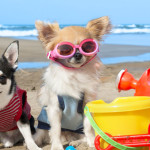 Cuidado nos dias de sol: Saiba mais sobre o protetor solar para pets