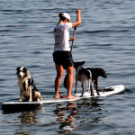 Entre nessa onda: Stand-up Paddle para cães