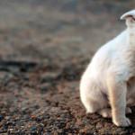 Sangue nas fezes dos pets pode acusar problemas no organismo