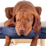 Tratamento alternativo: saiba mais sobre a quiropraxia