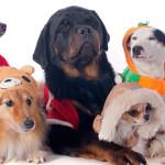 Curso online sobre proteção animal