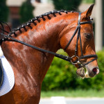 Jogos para os apaixonados por cavalos