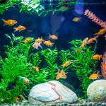 Peixes como solução terapêutica