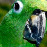 Vida longa para os papagaios