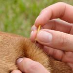 Acupuntura veterinária agora é reconhecida