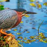 Brasil lidera ranking de pássaros ameaçados de extinção