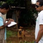 Censo de cães e gatos