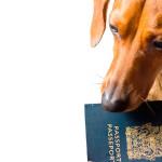 Passaporte obrigatório a partir deste mês
