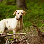 Simpatia para achar animal de estimação desaparecido