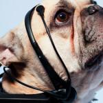 "Tecnologia para ler ""pensamentos"" de cachorro"