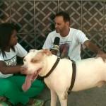 Uma prova de amor aos animais