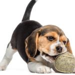 Brincadeiras para melhorar comportamento do seu cão
