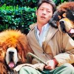 Um Mastim Tibetano de R$ 4,5 milhões