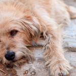 Um canal para achar animais perdidos