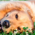 Animais e plantas: dicas para uma boa convivência